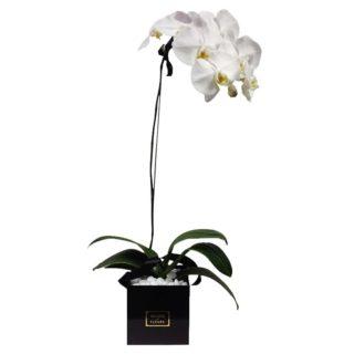Белая орхидея в квадратной коробке